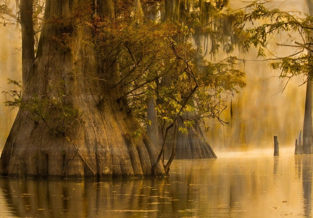 Majesty of the Swamp, Theresa Mullins Low, Louisiana PS, 3rd Place