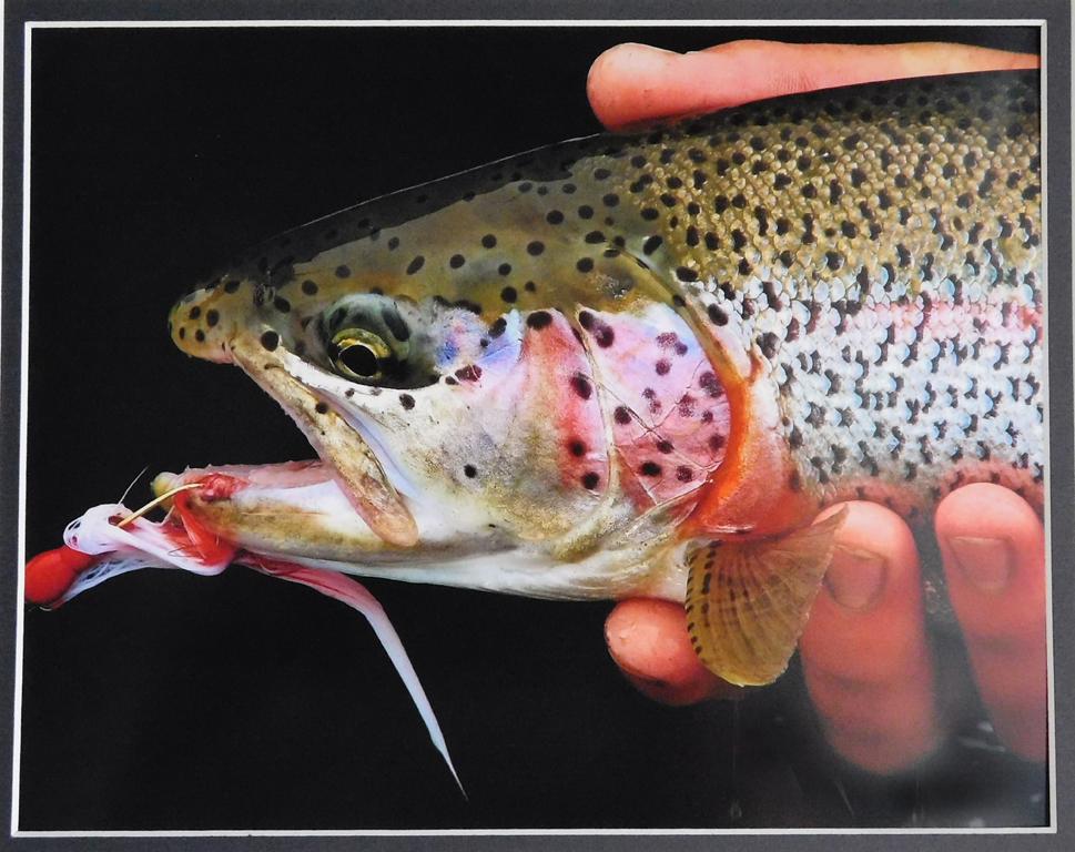 Rainbow Trout, Sylvia Murray, National Park CC, 2nd HM