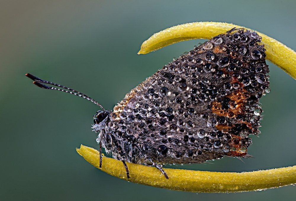 NDB-Tiger-Tail Butterfly, John Miguez, Lafayette PS, 1st Place