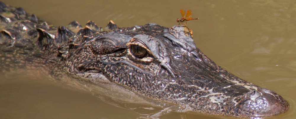 Hitching a Ride, Marcia Avery, Slidell PC, 3rd Place