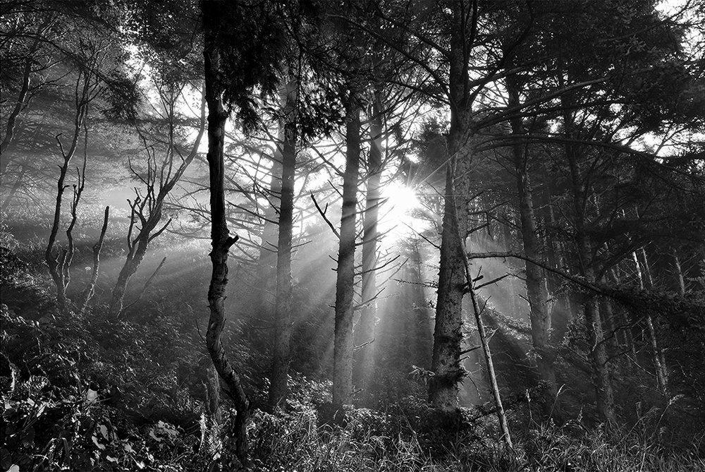 Look Beyond the Light, David Morgan, Cowtown CC, 2nd