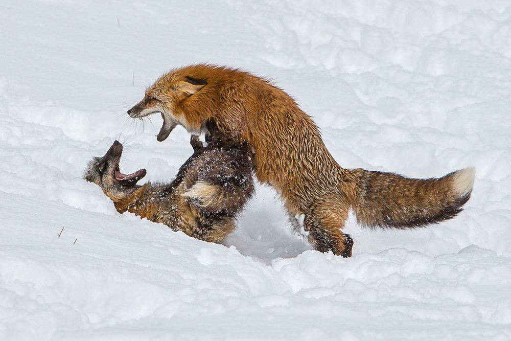 Alpha Fox, Doug Heimstead, Slidell PC,3rd