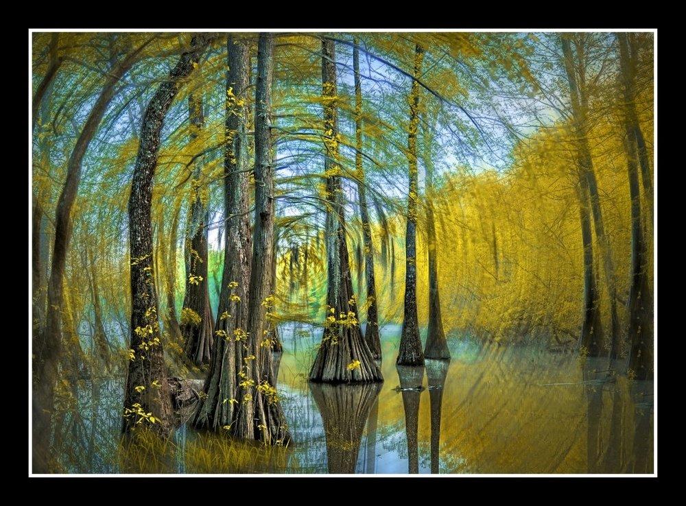 Swamp Dreaming, Robin Stevens, Louisiana PS, 1st HM