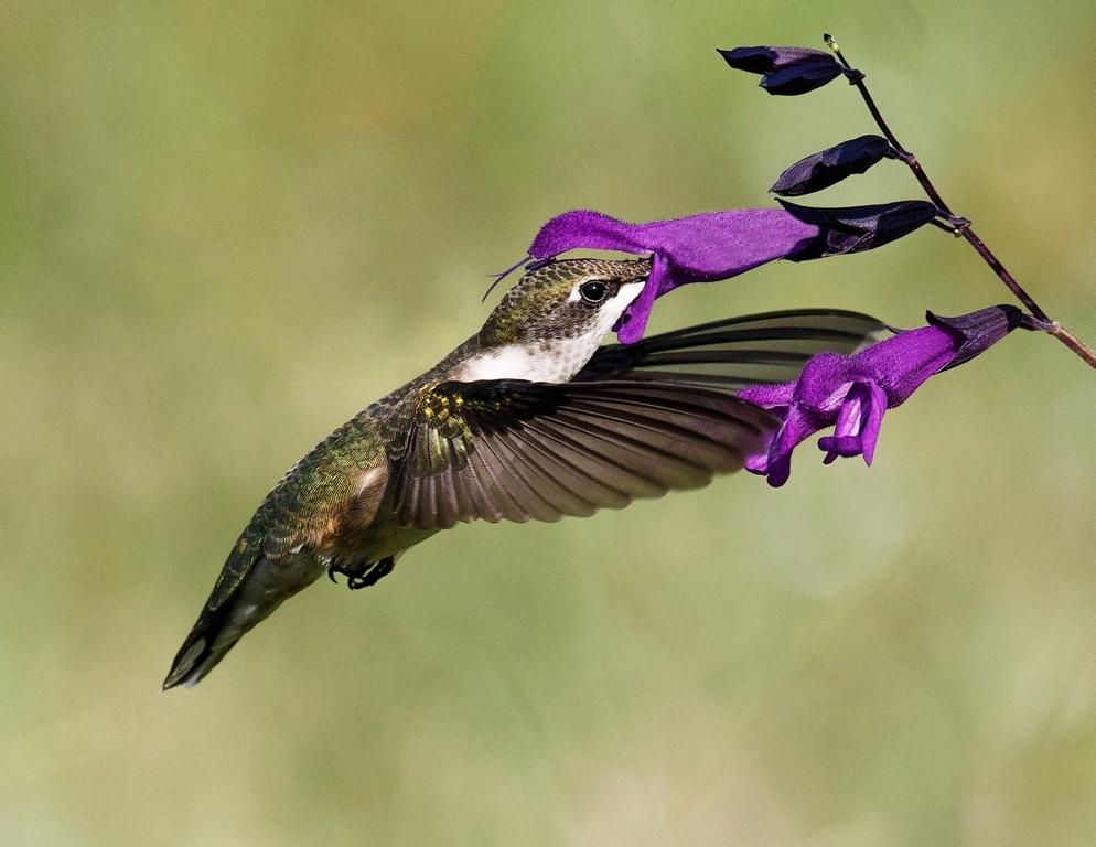 Enjoying Nectar, Marilyn Holloway, Houston CC, 3rd Place