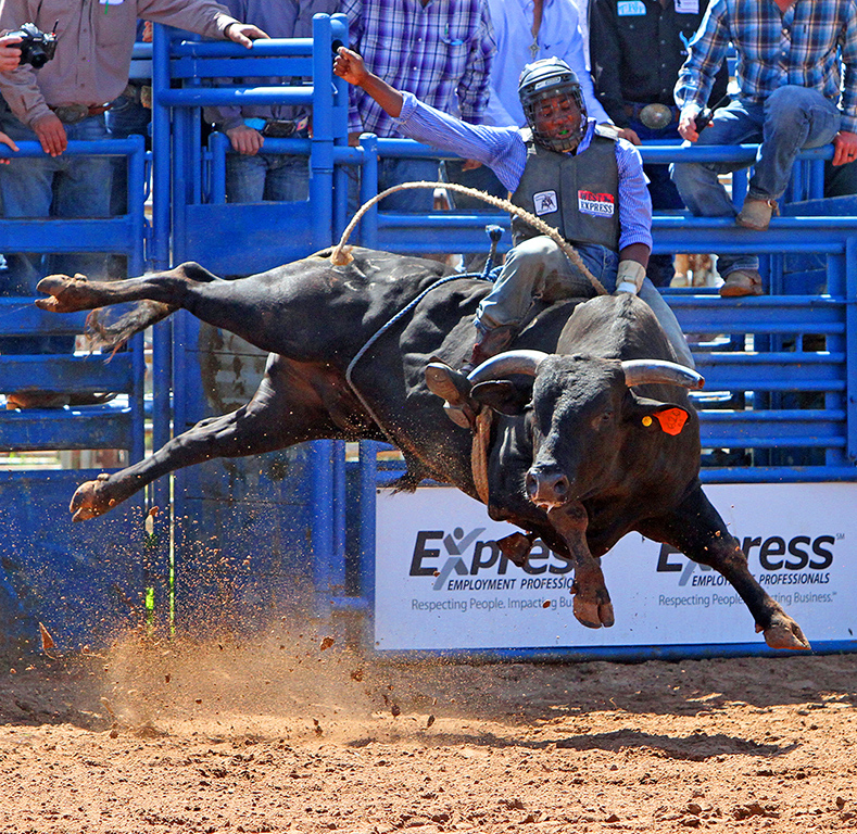 Wild Ride No4, Darrell Dover, Oklahoma CC, 1st HM