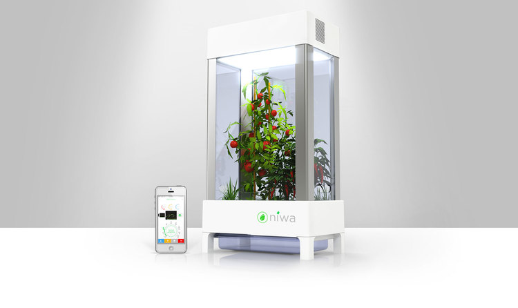 "Niwa, a digital terrarium designed to help people grow food in their homes, is aimed at people who don't have yards, such as apartment-dwellers who live in cities. It is marketed as a key technology for a ""future where anyone can grow their own food."" Niwa promotes efficiency and functionality, and as a consequence of emphasizing the ease of growing food, this system removes people from the process, suggesting an engineering-driven, and ultimately, disembodied engagement with food."