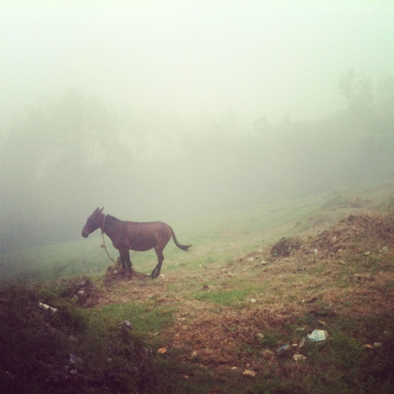 joshandchandler :     Up the mountains