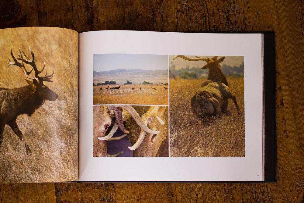 f70_book4.jpg