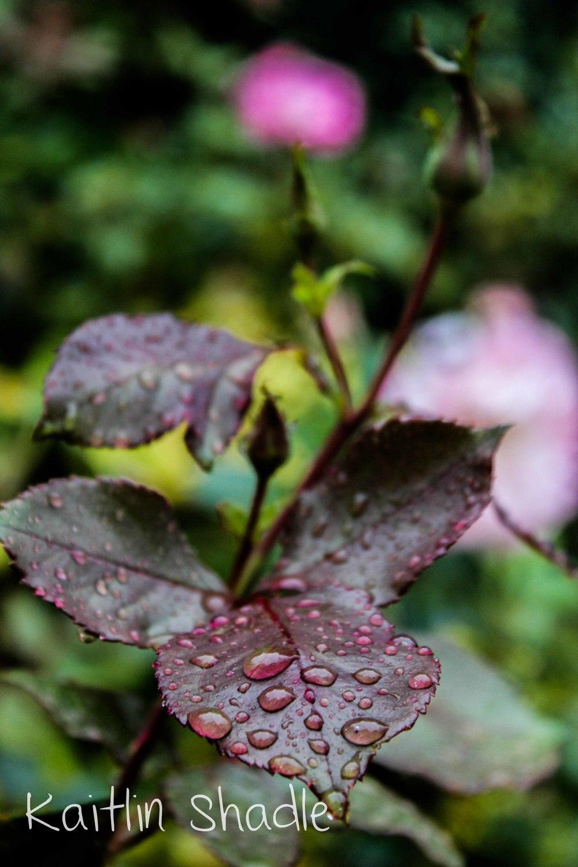 A Little Rain