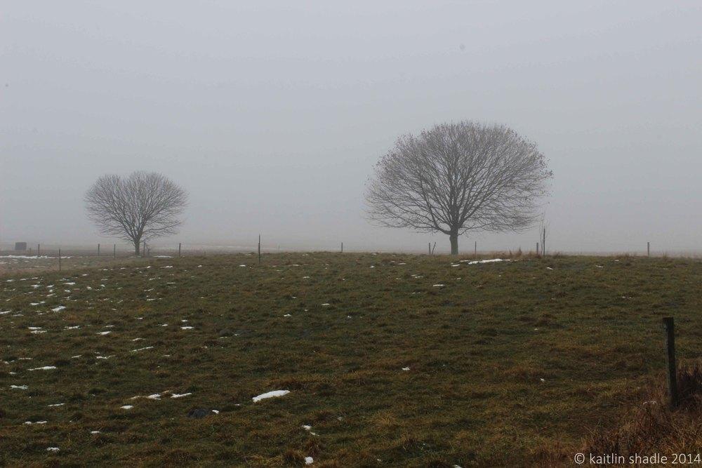 Field, Fog, Two Trees