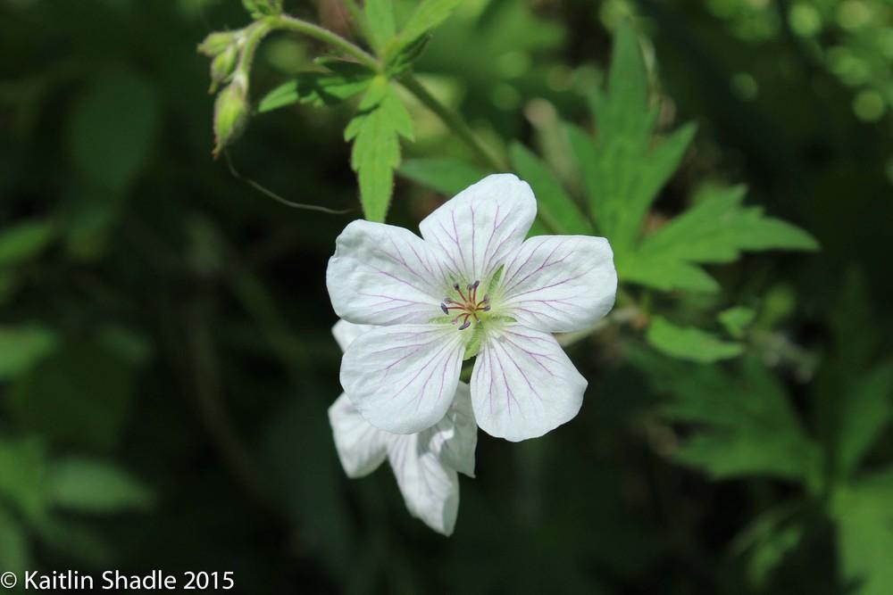 Beverley's Flower