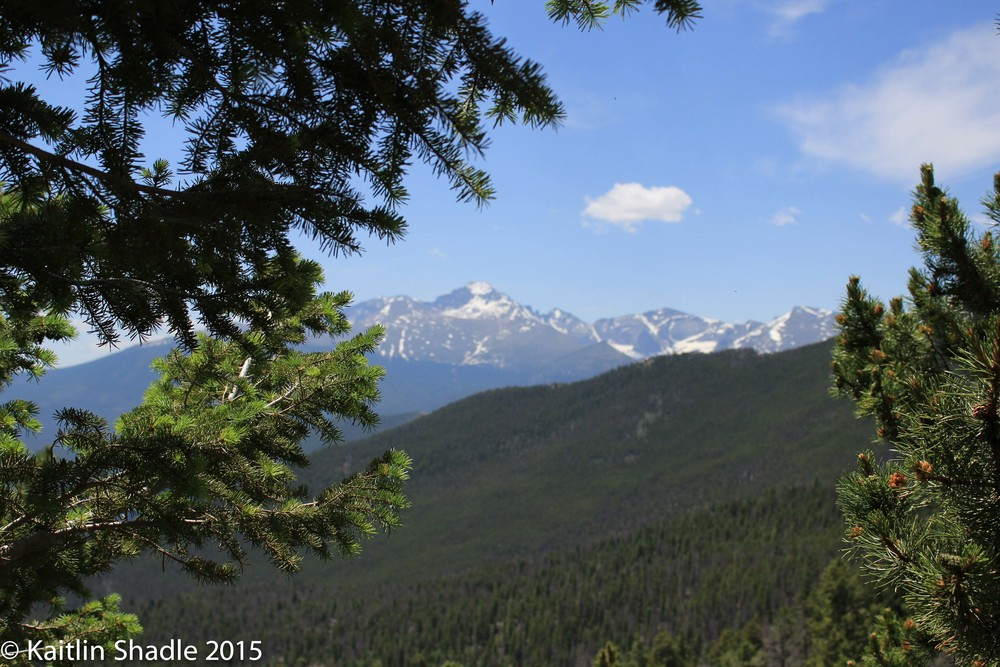 Trees and Mountains RMNP
