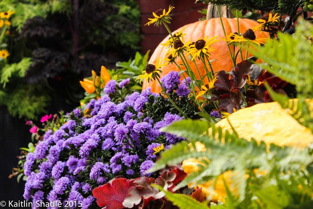 Flowers and Pumpkin