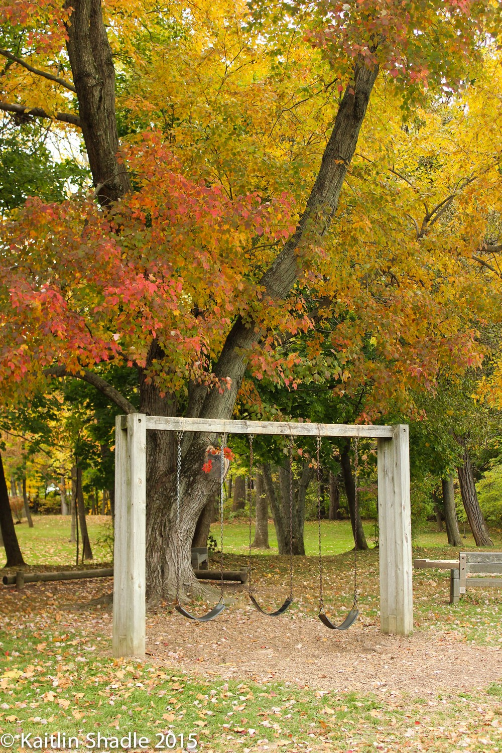 Swings in Fall