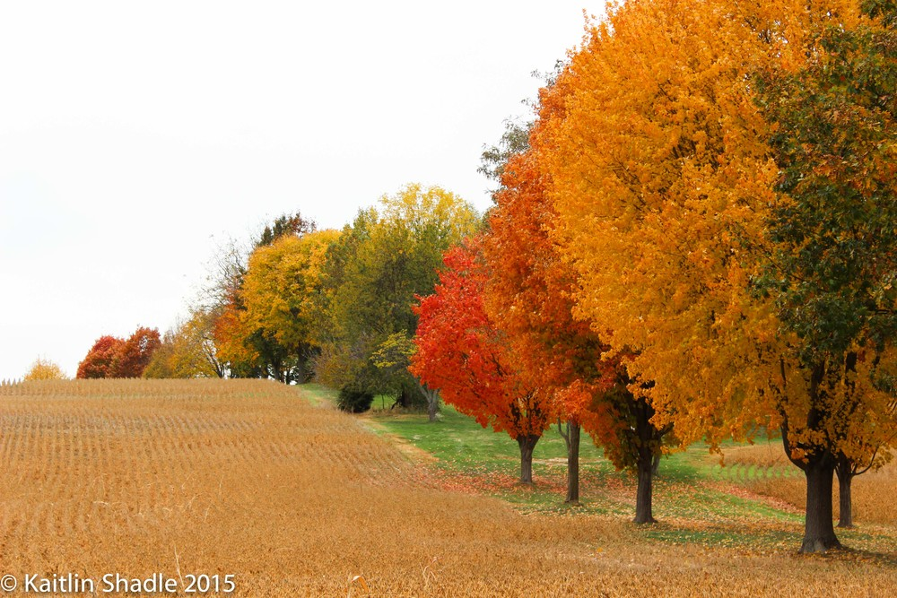 Tree Lined in the Fall
