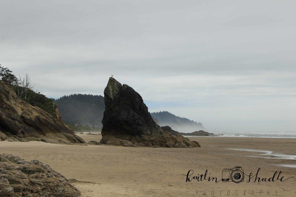 Bird on a Rock at Hug Point