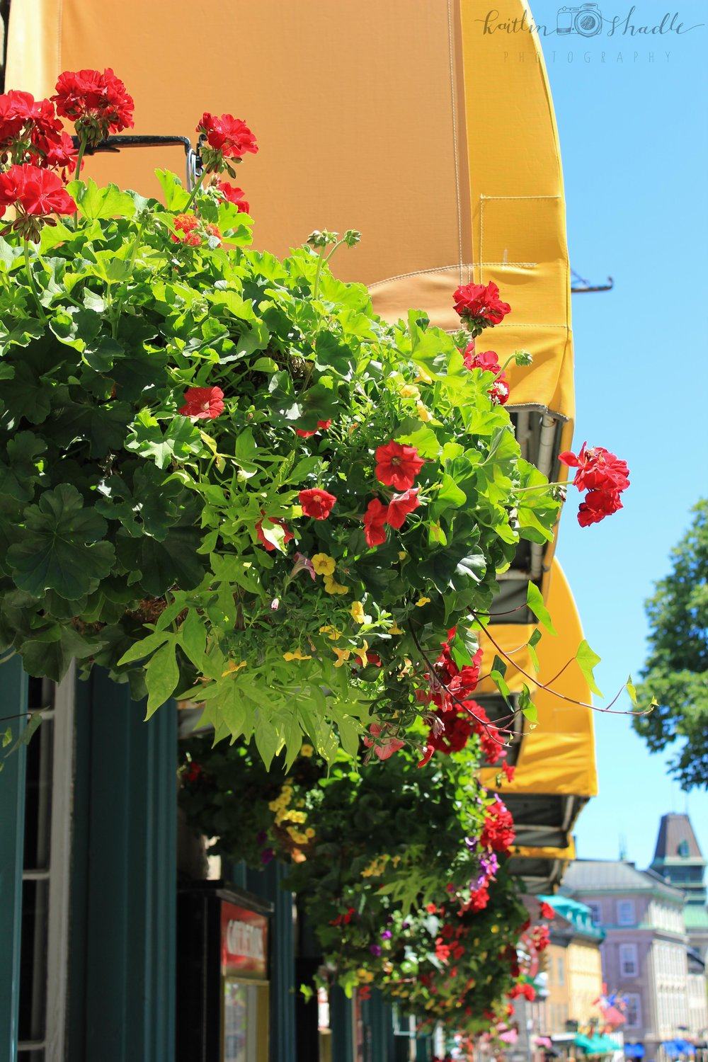 Yellow Awnings in Quebec City