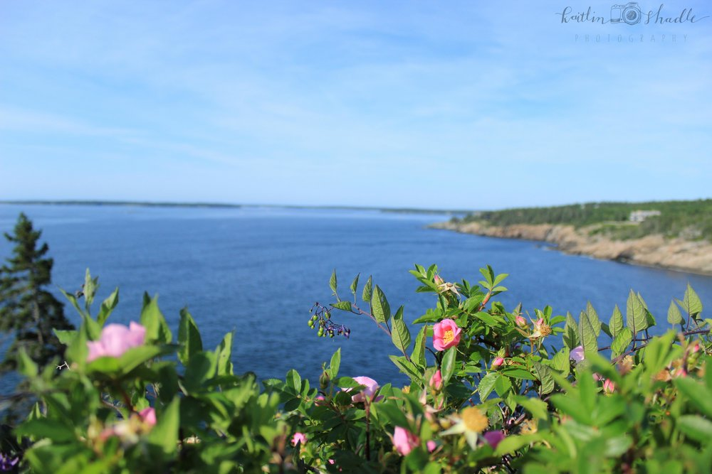 Between Seal and Northeast Harbors