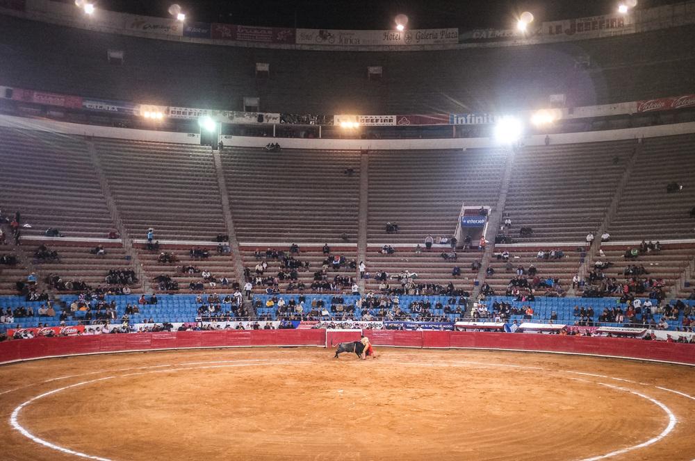 Bull Fight-26.jpg
