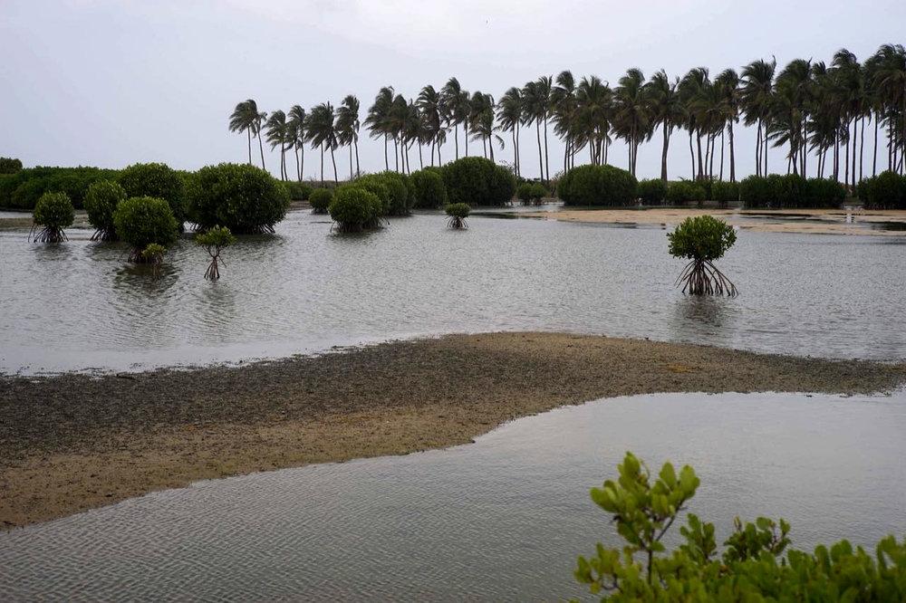 discover-kalpitiya-by-jeep-lagoon (1).jpg