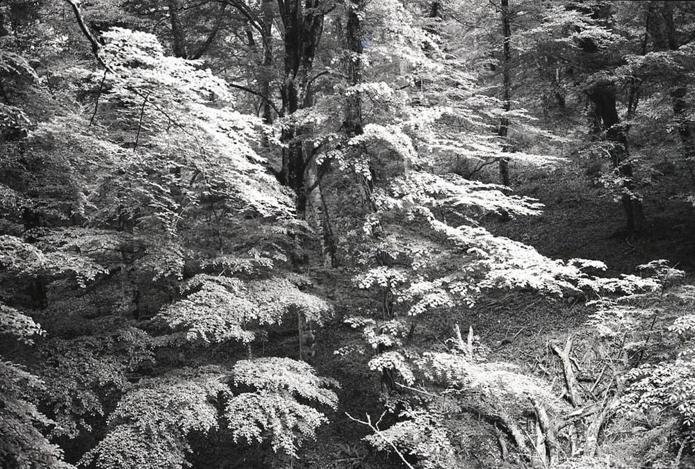 Umbra Forest, Abruzzi, Italy