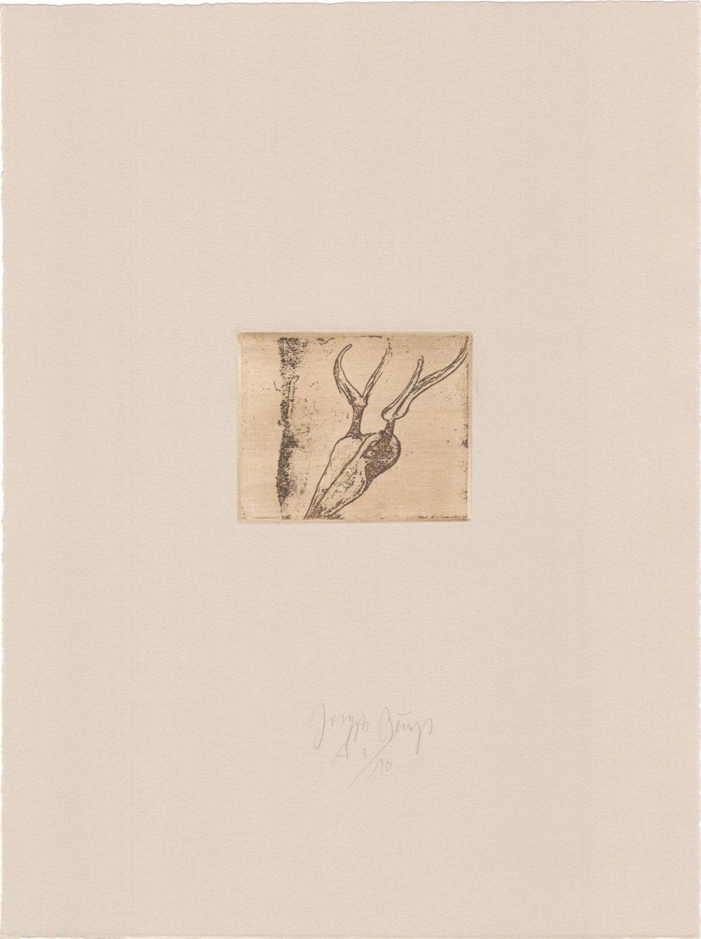 Hirschschädel - 32/75 (Normalausgabe, Radierung auf Rives gris) 1985