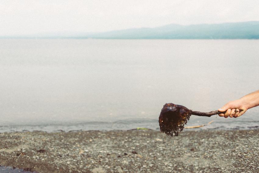 gaspesie-quebec-canada-gaspé-boom-reserve-driftwood-parc-forillon-plage-beach-méduse-jellyfish