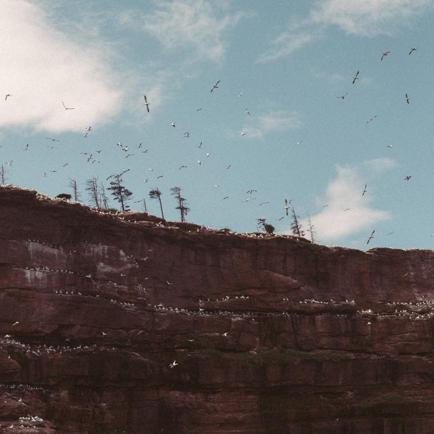gaspesie-quebec-canada-percé-roché-percé-île-island-bonaventure-océan-bâteau-oiseaux-birds