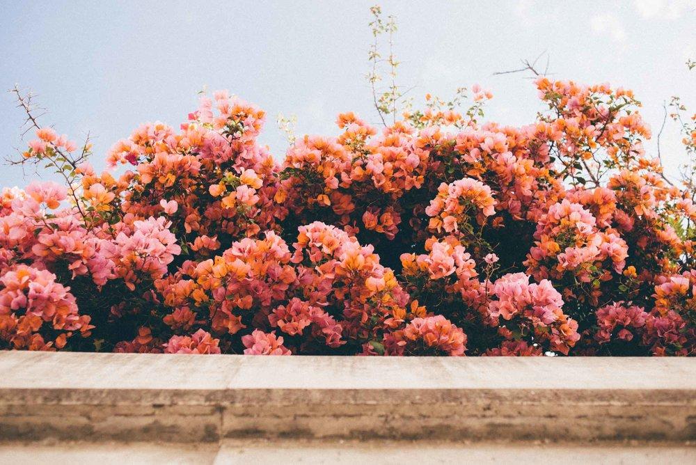 santa-barbara-california-usa-travel-photographer-sara-megan-8.jpg