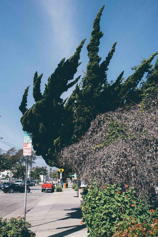 santa-barbara-california-usa-travel-photographer-sara-megan-13.jpg