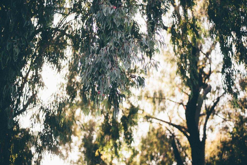 santa-barbara-california-usa-travel-photographer-sara-megan-16.jpg
