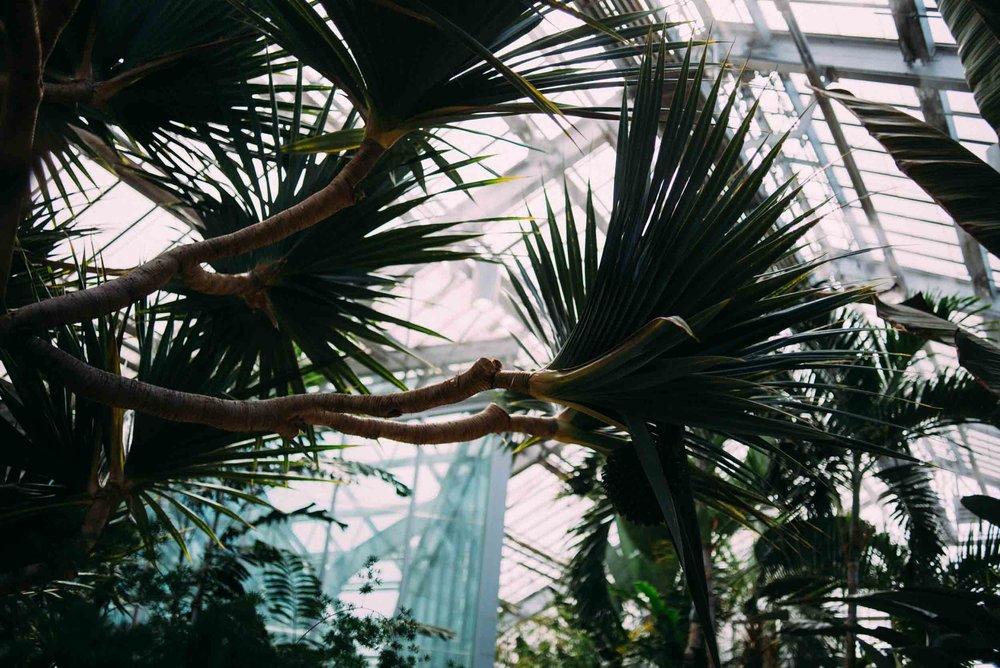 jardin-botanique-montreal-quebec-canada-botanical-gardens-sara-megan-4.jpg