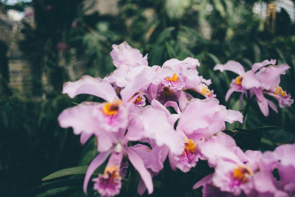 jardin-botanique-montreal-quebec-canada-botanical-gardens-sara-megan-6.jpg
