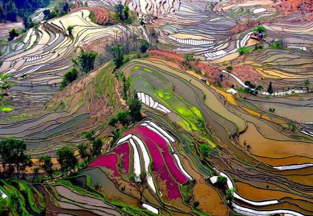terrace-rice-fields-china.jpg