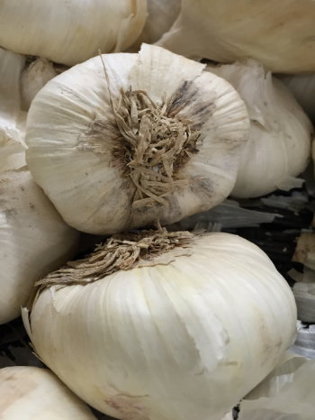 Garlic is an amazing immune system booster!