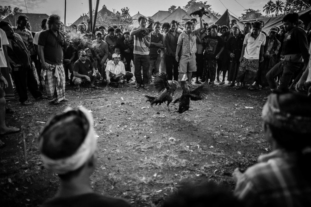 Tajen - Traditional cockfighting in Bali © Gareth Moon 2017