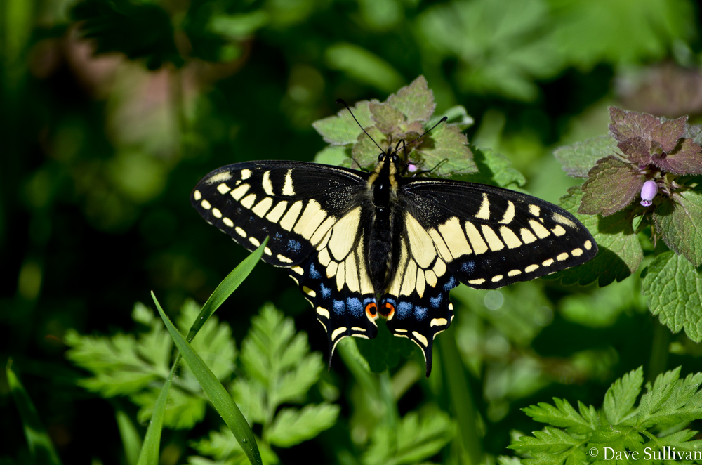 Butterfly - april-2012.jpg