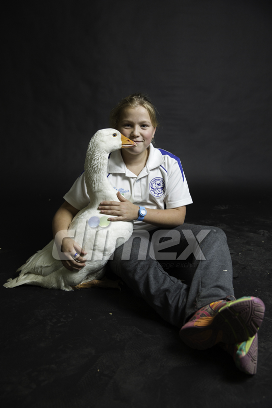 Jade Curtis, 12, with her goose Quackers.