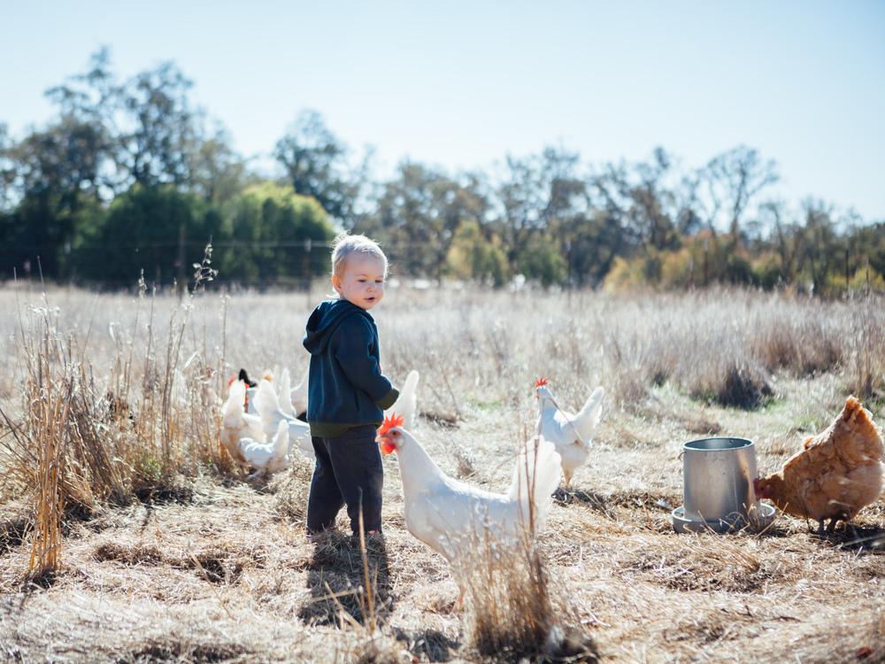 Pergamit Farm,November 2015