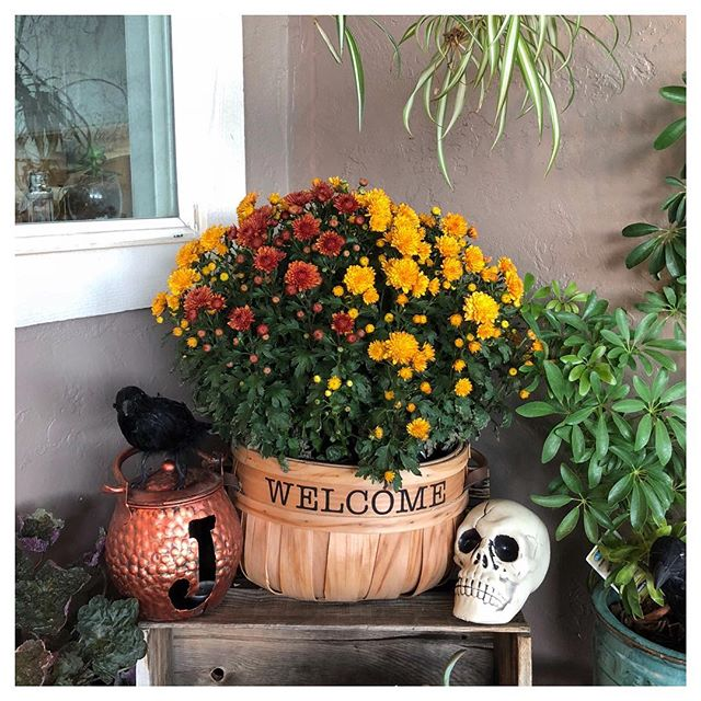 Starting to feel like falloween around here 🎃💀🍁🕸🍂