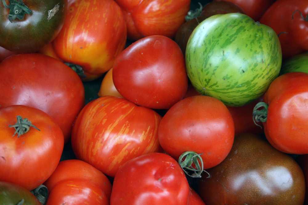 tomatoes small.jpg