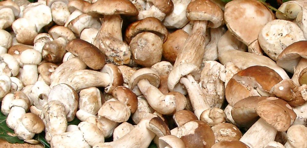 mushrooms.jpg