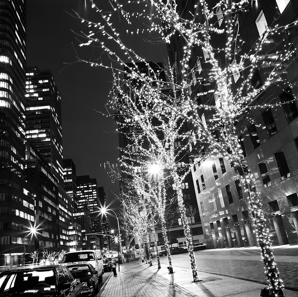 x mas trees on street.jpg