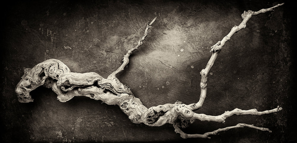 Branch texture toned.jpg