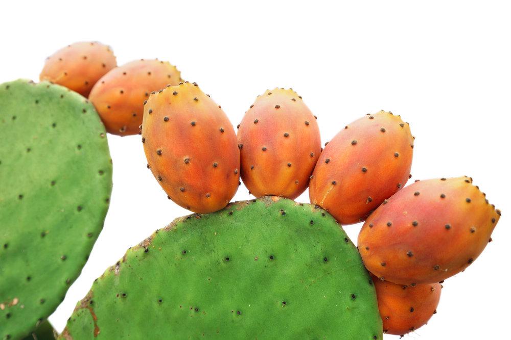 E. EXCEL cactus_1