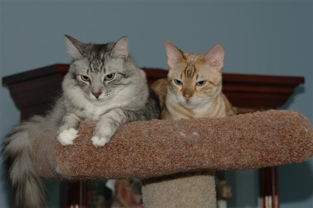 Storm and Miles on cat tree