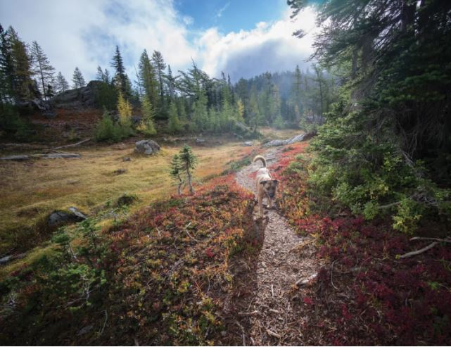 Hiking near Alpine Lakes High Camp. IMAGE: COURTESY MARK GRIFFITH