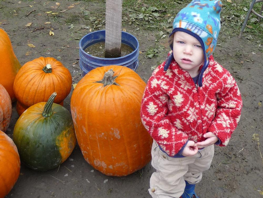 Jubilee Farm pumpkins. Credit: Elisa Murray