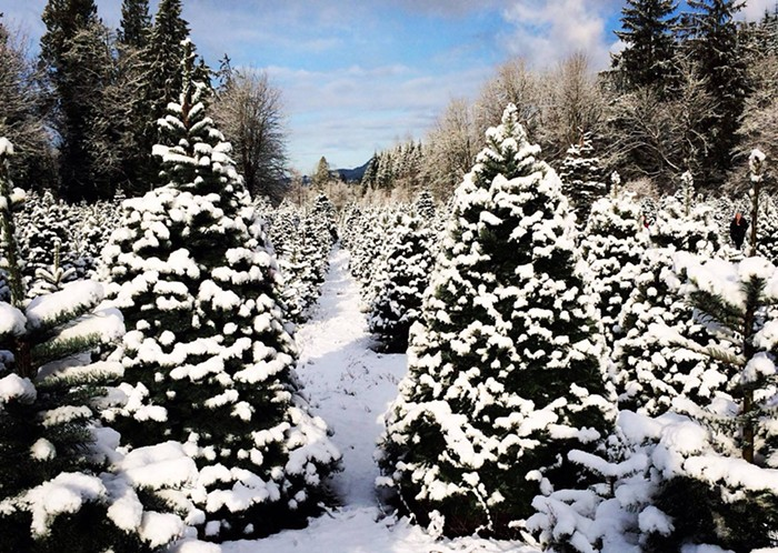 Enchanted Winds Tree Farm    offers hot drinks and holiday decorations in addition to their U-cut Firs.