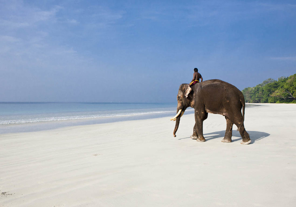 Balade-a-dos-d-elephant-sur-la-plage.jpg